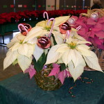 poinsettia display 1