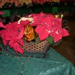 poinsettia display 3